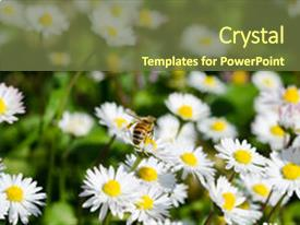 Colorful PPT layouts enhanced with animaly - bee in work backdrop and a tawny brown colored foreground.