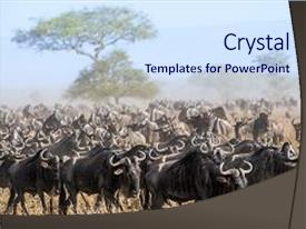 Savanna powerpoint templates crystalgraphics cool new slide set enhanced with antelopes connochaetes kenya africa theme and a sky blue colored toneelgroepblik Image collections