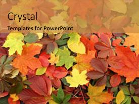 PPT layouts enhanced with background of fallen autumn leaves background and a gold colored foreground.