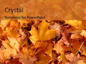 Amazing presentation theme having background of yellow autumn leaves backdrop and a gold colored foreground.
