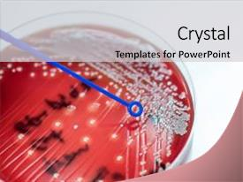 Colonial powerpoint templates crystalgraphics crystal powerpoint template with colonial colonies of white bacteria themed background and a light gray toneelgroepblik Gallery