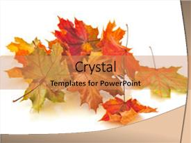 Amazing presentation having dry colorful autumn leaves backdrop and a coral colored foreground.