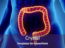 Digestive system powerpoint templates crystalgraphics crystal powerpoint template with intestine part of digestive system themed background and a navy blue colored toneelgroepblik Image collections