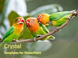<b>Crystal</b> PowerPoint template with lovely sun conure parrot birds themed background and a tawny brown colored foreground design featuring a [design description].