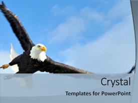Audience pleasing slide set having mature american bald eagle swooping backdrop and a light blue colored foreground.