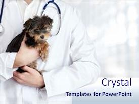 Powerpoint templates veterinary medicine image collections veterinary powerpoint templates crystalgraphics crystal powerpoint template with veterinary medicine pets puppy women animal themed background toneelgroepblik Image collections