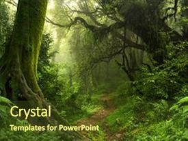 Jungle powerpoint templates crystalgraphics crystal powerpoint template with jungle morning with mist background themed background and a tawny brown toneelgroepblik Gallery
