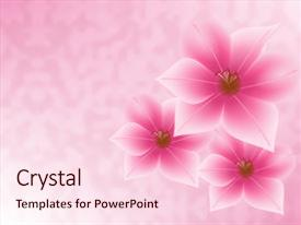 PPT theme enhanced with mothers day - three pink flowers background and a lemonade colored foreground.