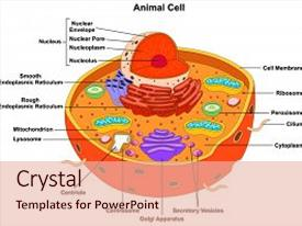 mitochondria biology powerpoint templates | crystalgraphics, Presentation templates