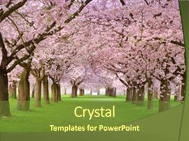 Presentation theme featuring rows of beautifully blossoming cherry background and a tawny brown colored foreground.