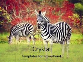 <b>Crystal</b> PowerPoint template with safari game drive eco travel themed background and a yellow colored foreground design featuring a [design description].