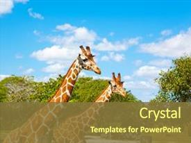 Powerpoint templates zoo free choice image powerpoint template free powerpoint templates zoo animals gallery powerpoint powerpoint templates zoo free gallery powerpoint template and layout toneelgroepblik Gallery