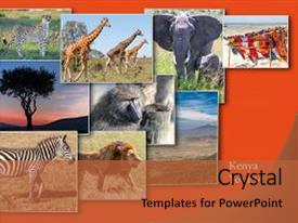 Powerpoint template various animals in a jungle with grayish slide set enhanced with sunset in the kenya africa theme and a red colored foreground custom template toneelgroepblik Image collections