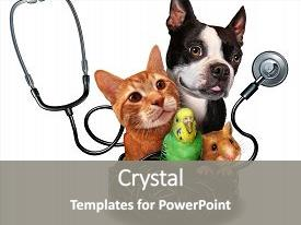 Hamster powerpoint templates crystalgraphics amazing slide set having hamster symbol for veterinarian medical backdrop and a gray colored foreground toneelgroepblik Image collections