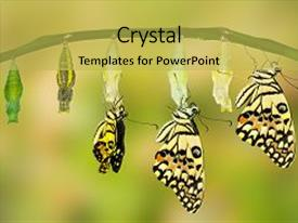 Transformation powerpoint templates crystalgraphics beautiful ppt featuring zoology of lime butterfly papilio image and a yellow toneelgroepblik Images