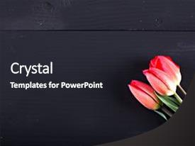 Amazing PPT theme having tulips red tulips on wooden backdrop and a dark gray colored foreground.