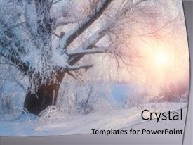 <b>Crystal</b> PowerPoint template with winter landscape-winter tree themed background and a light gray colored foreground design featuring a [design description].