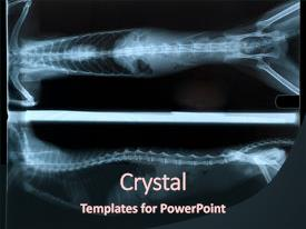 X ray powerpoint templates crystalgraphics audience pleasing slide set consisting of of backdrop and a wine colored foreground toneelgroepblik Gallery