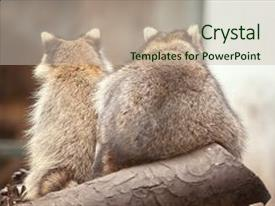 Zoology powerpoint templates crystalgraphics template size presentation enhanced with cute funny raccoons in zoological theme and a soft toneelgroepblik Images
