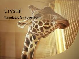 Powerpoint templates free download zoology images powerpoint zoology powerpoint templates crystalgraphics crystal powerpoint template with zoology cute giraffe in zoological garden themed background toneelgroepblik Images
