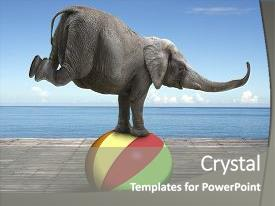 Balancing act powerpoint templates crystalgraphics a ppt with zoology elephant balancing on a colorful background and a gray colored foreground toneelgroepblik Images
