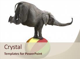 Balancing act powerpoint templates crystalgraphics presentation featuring zoology elephant balancing image and a lemonade colored foreground toneelgroepblik Images